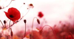 Звернення до ветеранів другої світової війни!
